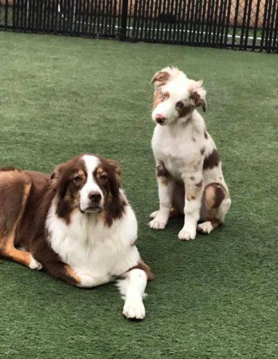 2 precious pups
