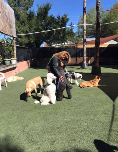 denise loving on the dogs